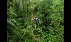 Costa Rica Jungle Tours